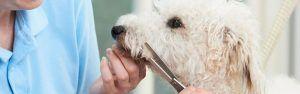 ¿Qué le sucede a tu peludo en la peluquería canina?
