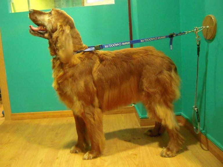 Peluquería canina Gamperros (Miño)