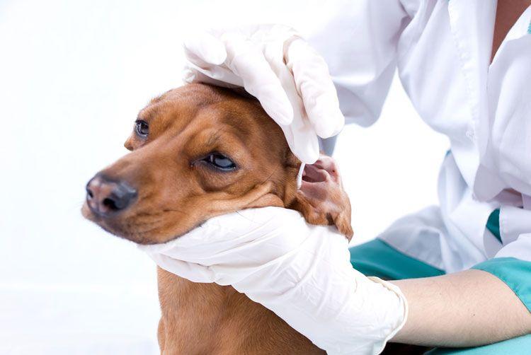 Veterinario con perro