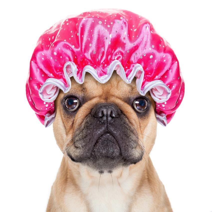Perro con gorro de ducha