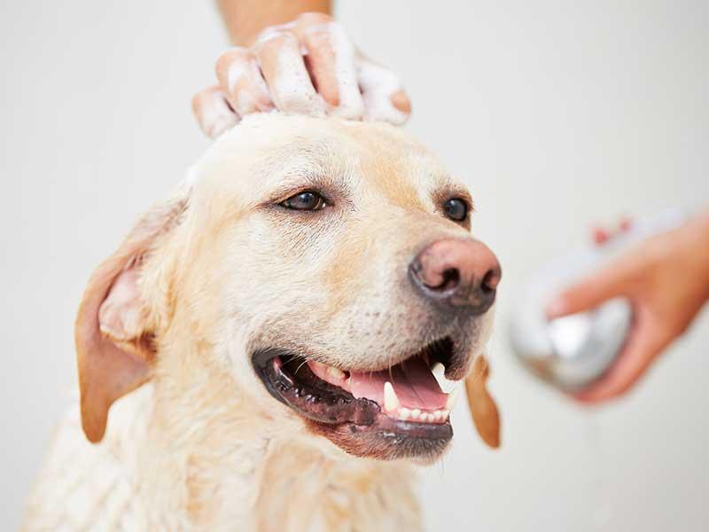 Bañando perro