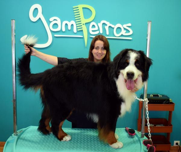 Patricia Rodríguez. Peluquería canina Gamperros, Miño (A Coruña)